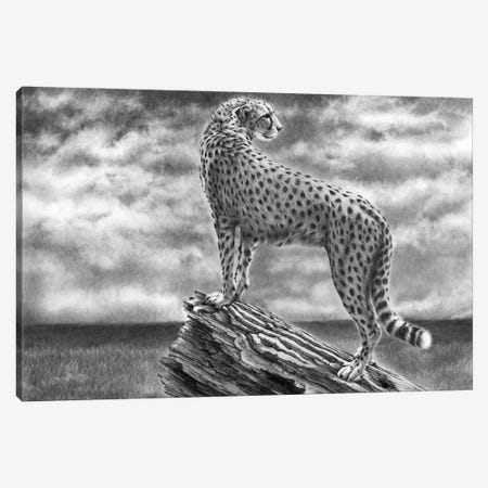 Cheetah Something In The Air Canvas Print #PWI167} by Peter Williams Canvas Wall Art