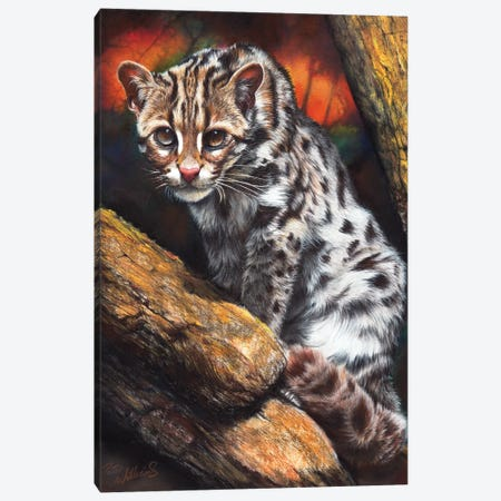 Wildcat Canvas Print #PWI173} by Peter Williams Canvas Artwork
