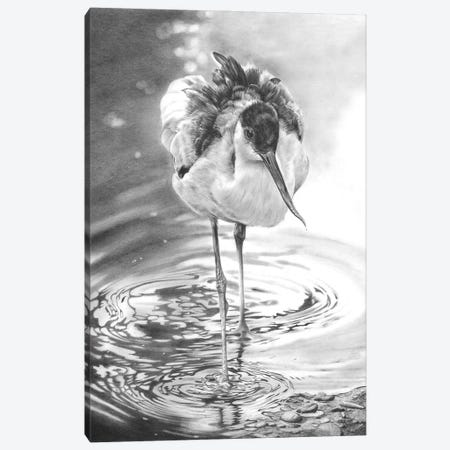 Avocet I Canvas Print #PWI179} by Peter Williams Canvas Wall Art