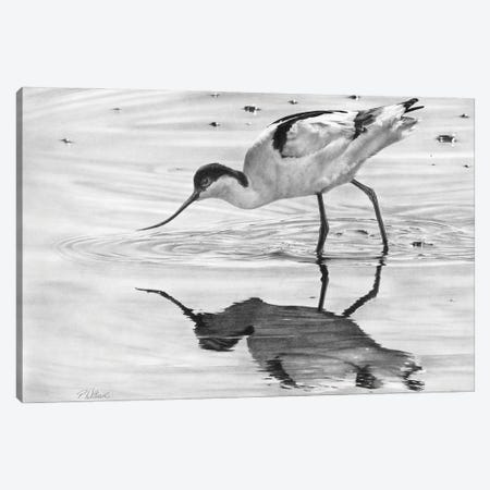Avocet II Canvas Print #PWI180} by Peter Williams Canvas Print