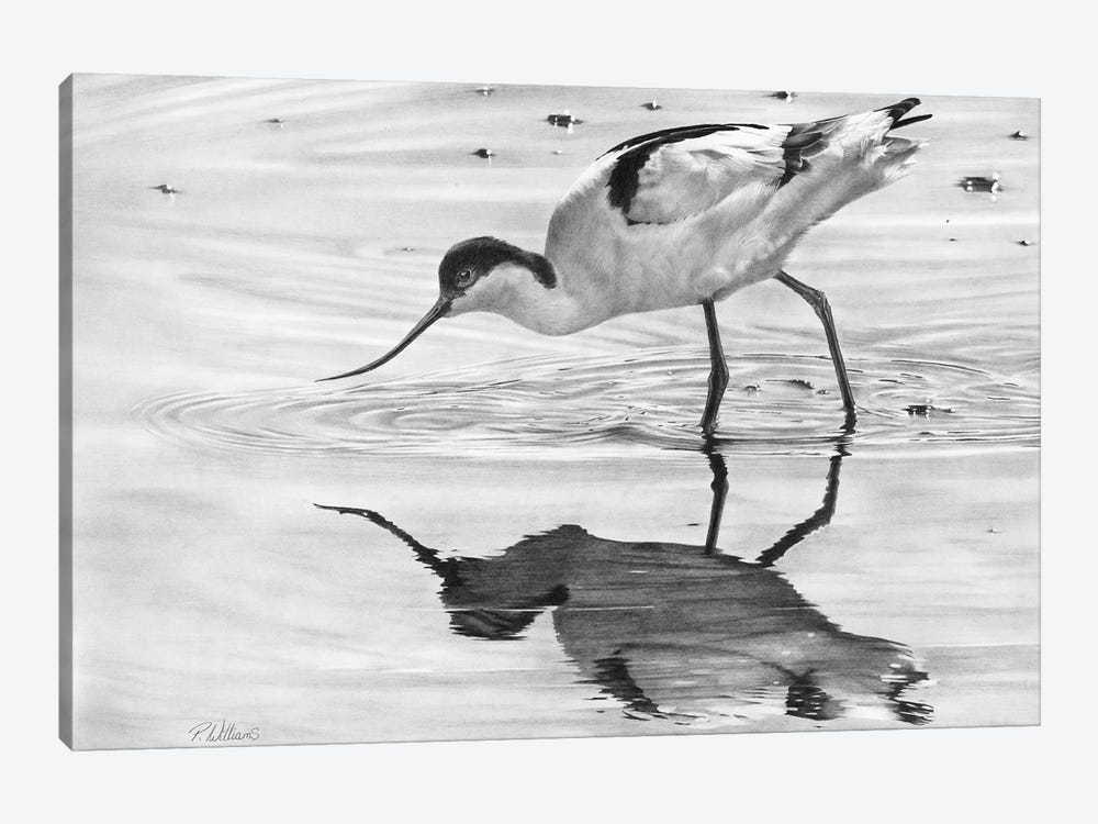 Avocet II by Peter Williams 1-piece Canvas Wall Art