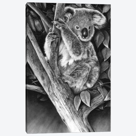 Up A Gum Tree Canvas Print #PWI194} by Peter Williams Canvas Art Print