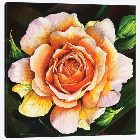 Blooming Marvellous Canvas Print #PWI19} by Peter Williams Art Print