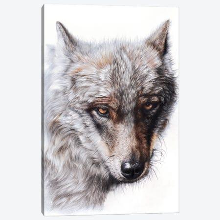 Sierran Spirit Canvas Print #PWI206} by Peter Williams Art Print