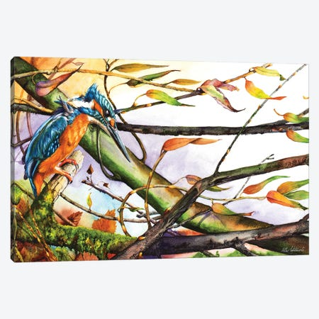 Catch The Wind Canvas Print #PWI24} by Peter Williams Canvas Print