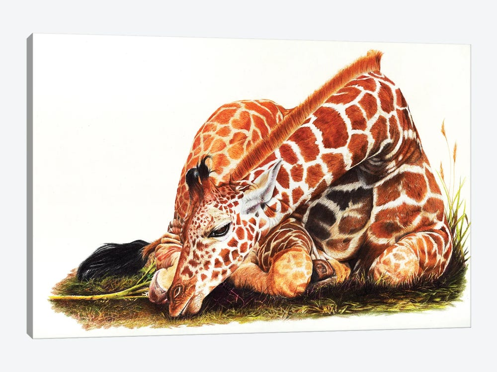 Down To Earth by Peter Williams 1-piece Canvas Art Print