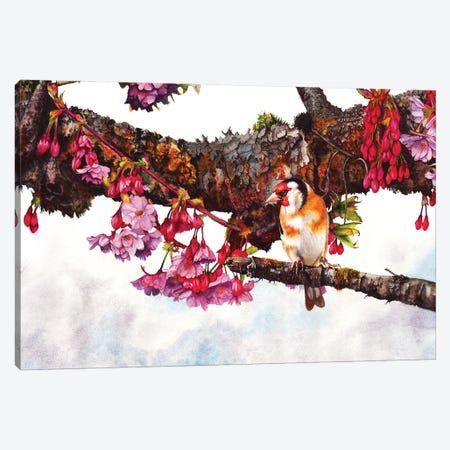 In The Pink II Canvas Print #PWI63} by Peter Williams Canvas Artwork