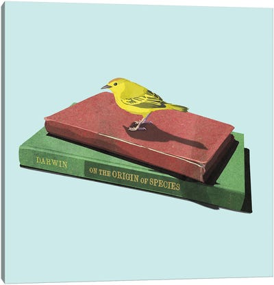 Darwin's Finch Canvas Art Print