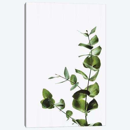 Elegant Green Plant Canvas Print #PXY170} by Pixy Paper Canvas Artwork
