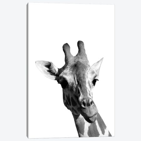 Mono Giraffe Canvas Print #PXY342} by Pixy Paper Canvas Print