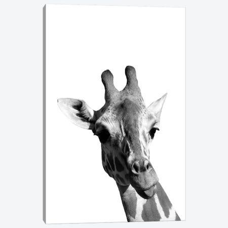 Mono Giraffe Canvas Print #PXY342} by Pixy Paper Canvas Print