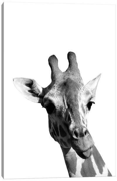 Mono Giraffe Canvas Art Print