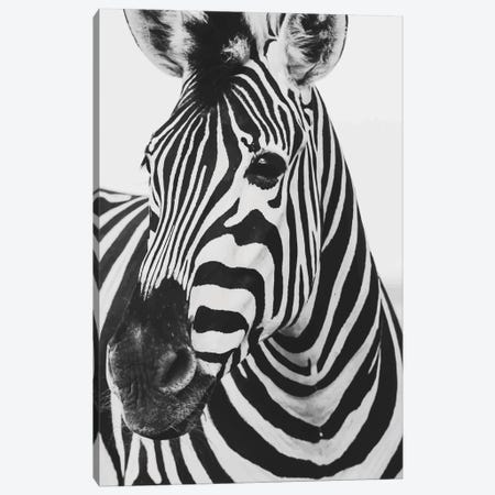 Mono Zebra Canvas Print #PXY345} by Pixy Paper Canvas Artwork