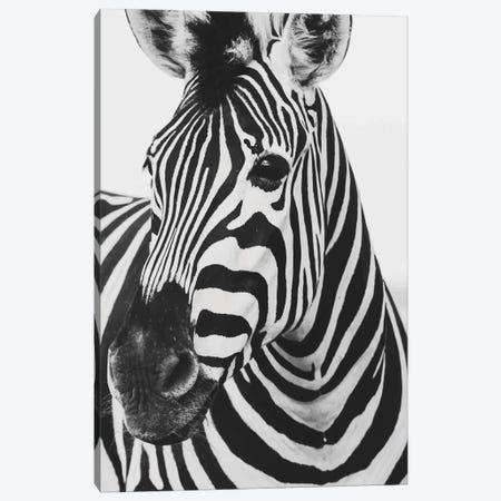 Mono Zebra Canvas Print #PXY345} by Pixy Paper Canvas Artwork