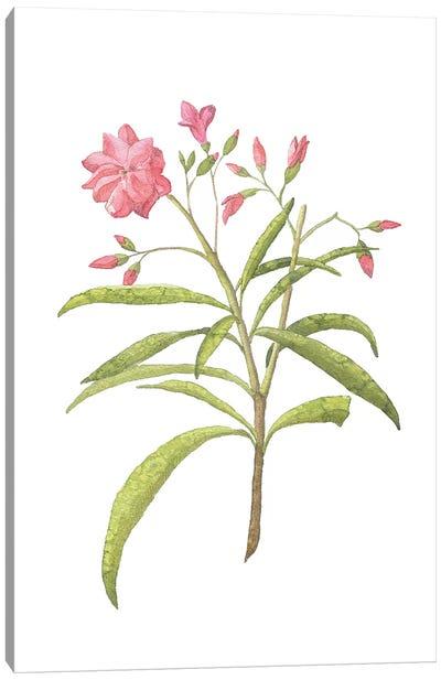 Pink Plant Floral Collection Canvas Art Print