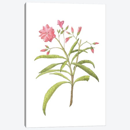 Pink Plant Floral Collection Canvas Print #PXY399} by Pixy Paper Canvas Art