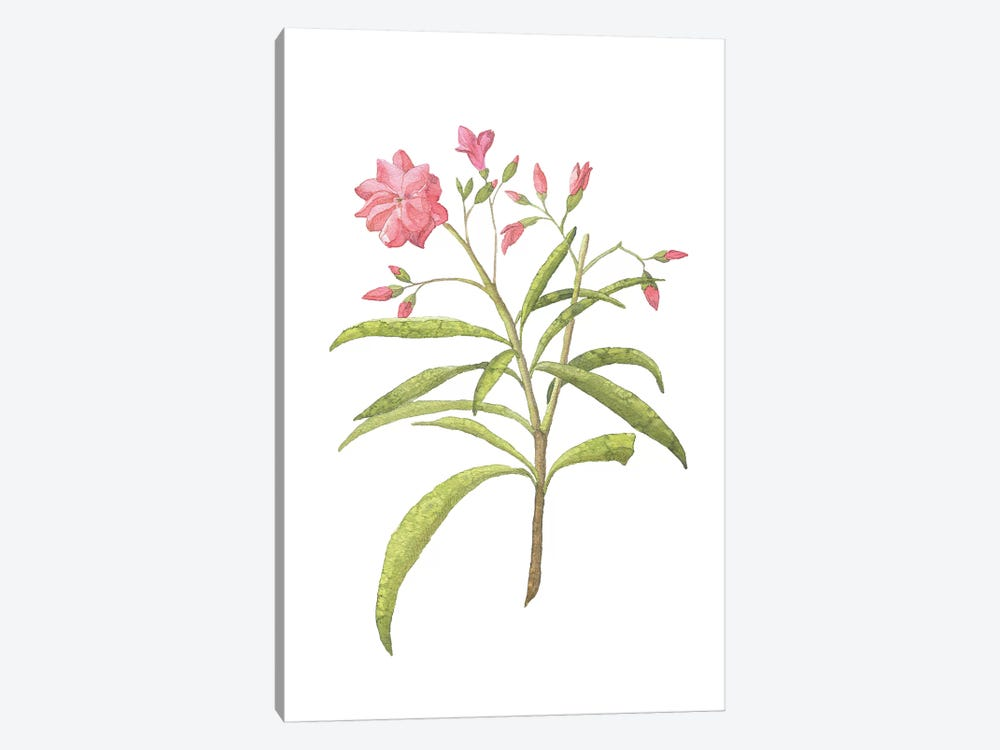 Pink Plant Floral Collection by Pixy Paper 1-piece Canvas Art