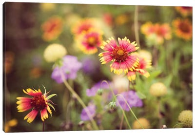 Wild Blooms III Canvas Art Print