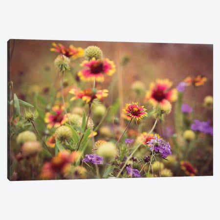 Wild Blooms IV Canvas Print #QNT12} by Sonja Quintero Canvas Print