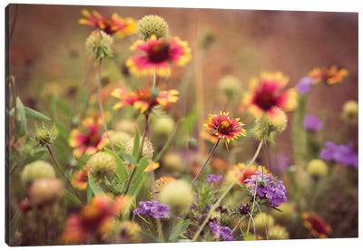 Wild Blooms IV Canvas Print #QNT12