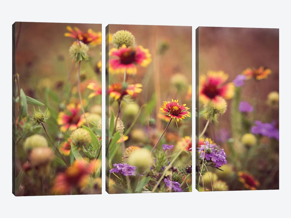 Wild Blooms IV by Sonja Quintero 3-piece Art Print
