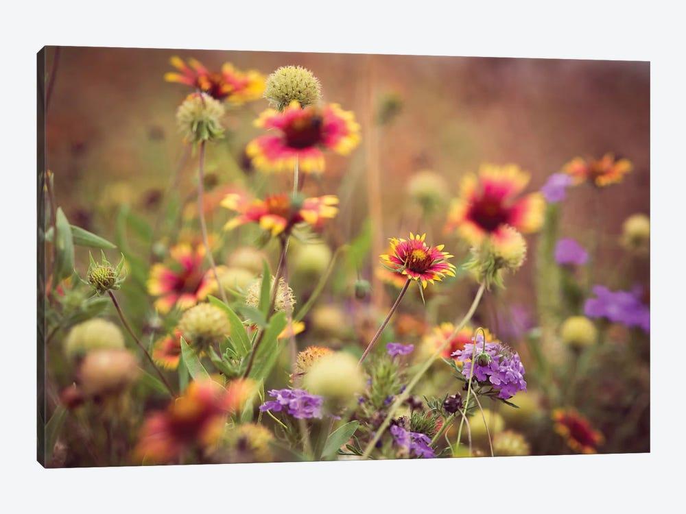 Wild Blooms IV by Sonja Quintero 1-piece Canvas Print
