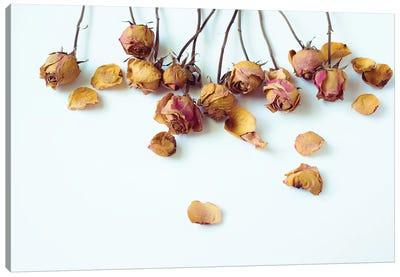 Golden Petals I Canvas Art Print