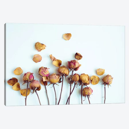 Golden Petals II Canvas Print #QNT14} by Sonja Quintero Canvas Artwork