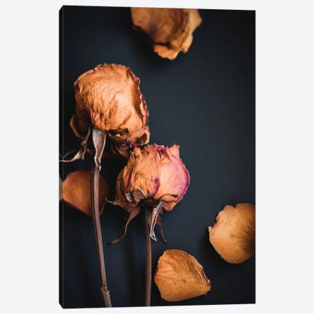 Wilted Dreams I Canvas Print #QNT17} by Sonja Quintero Canvas Wall Art
