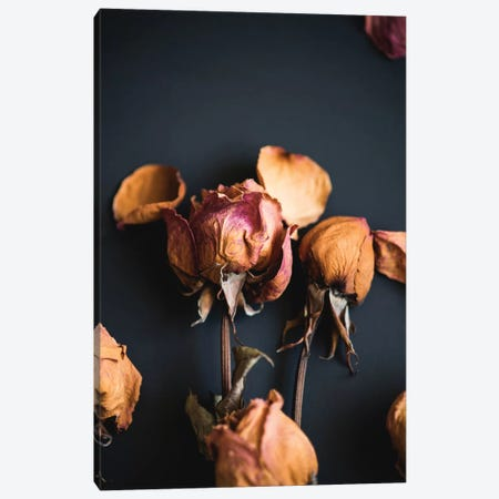 Wilted Dreams II Canvas Print #QNT18} by Sonja Quintero Art Print