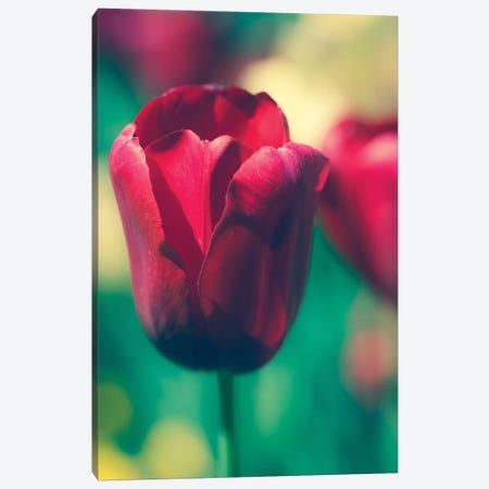 Tulip Sway I Canvas Print #QNT7} by Sonja Quintero Canvas Art Print