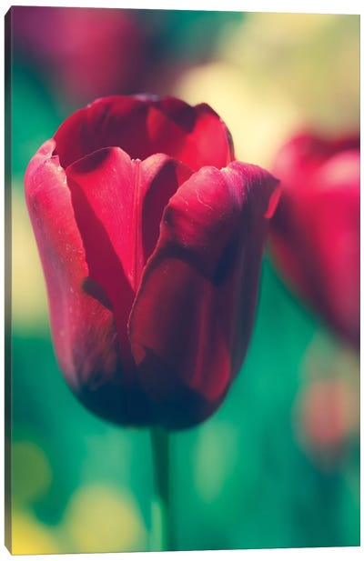 Tulip Sway I Canvas Art Print