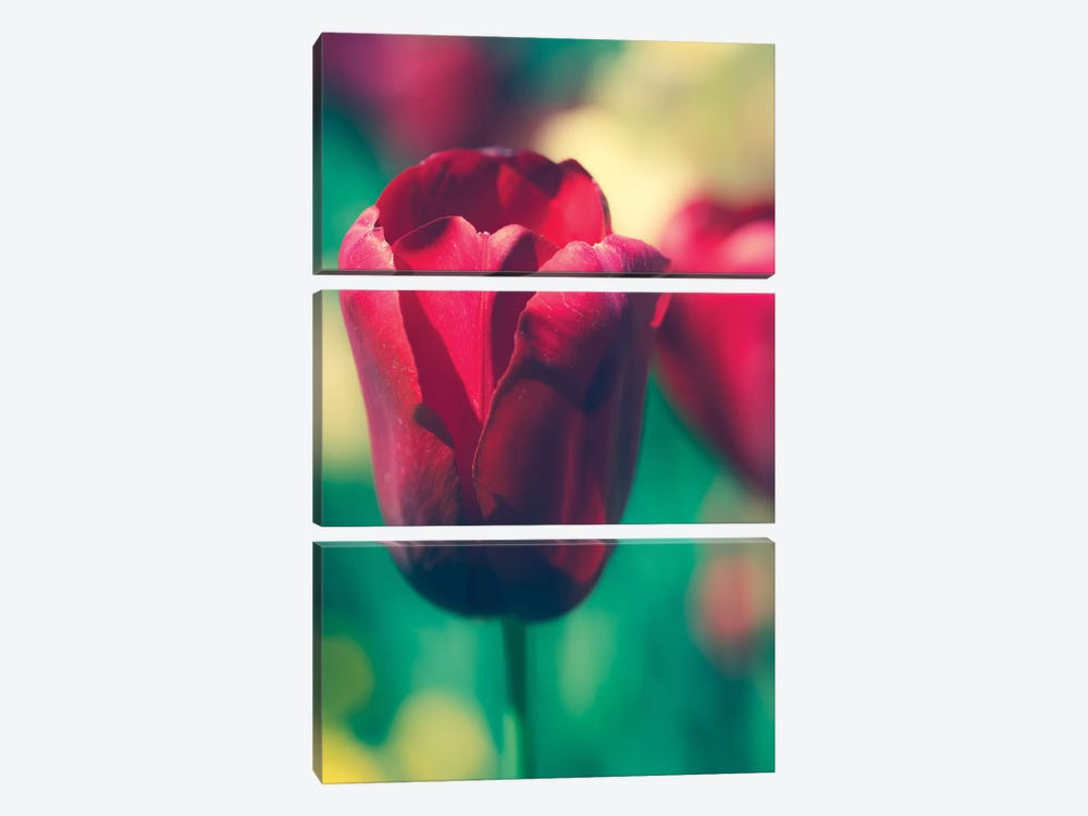Tulip Sway I by Sonja Quintero 3-piece Canvas Art Print