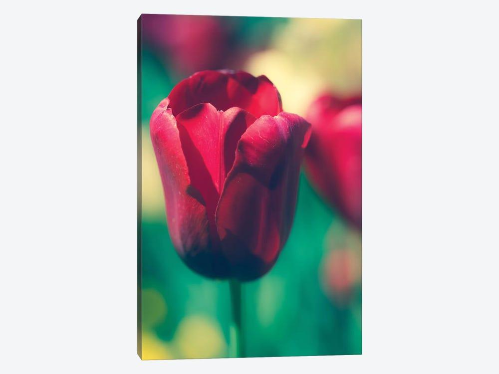 Tulip Sway I by Sonja Quintero 1-piece Art Print