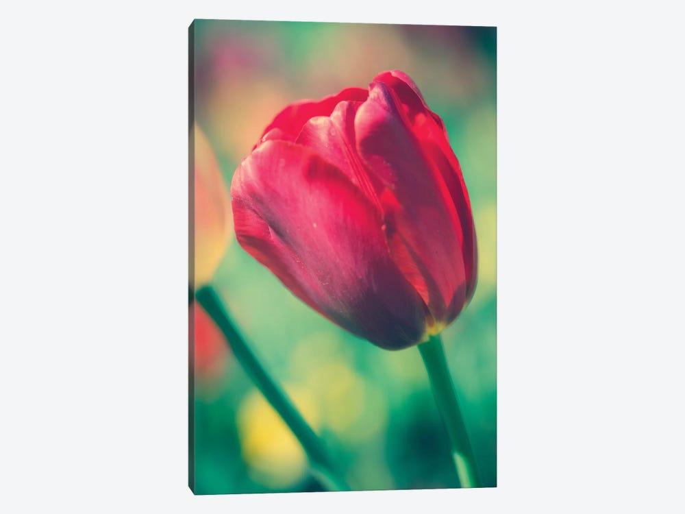 Tulip Sway II by Sonja Quintero 1-piece Canvas Artwork