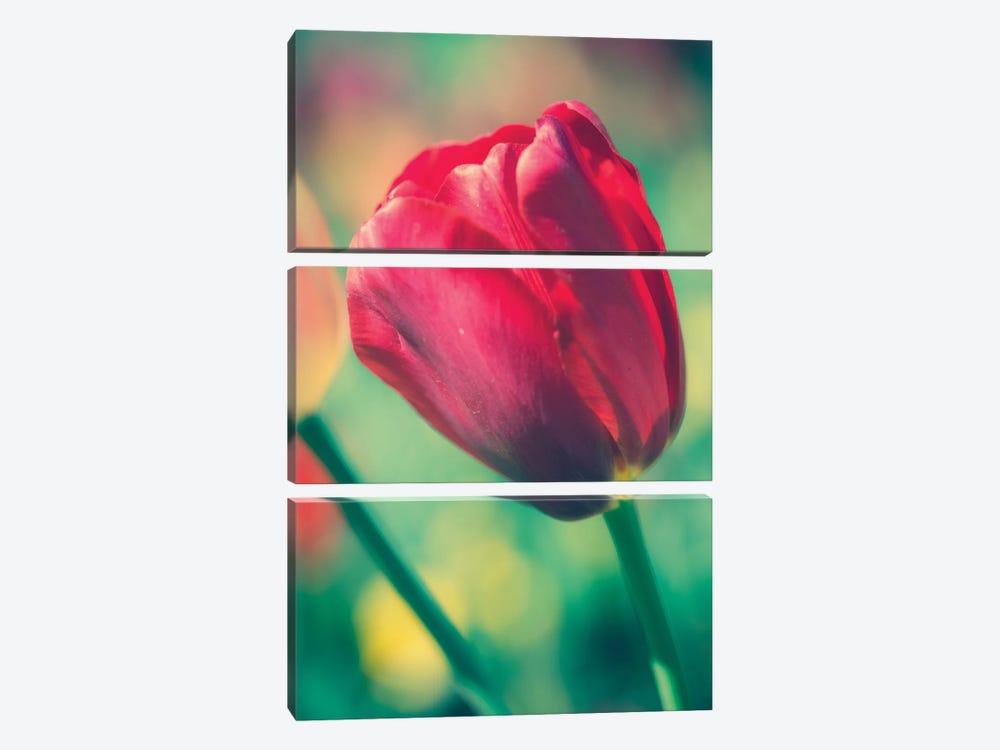 Tulip Sway II by Sonja Quintero 3-piece Canvas Artwork