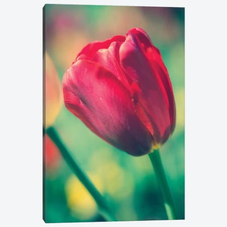 Tulip Sway II Canvas Print #QNT8} by Sonja Quintero Canvas Art