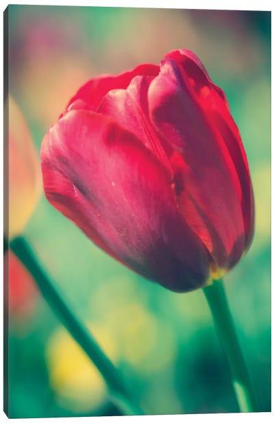 Tulip Sway II Canvas Art Print