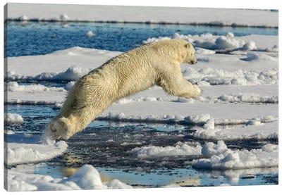 Polar Bear Jumping Canvas Art Print