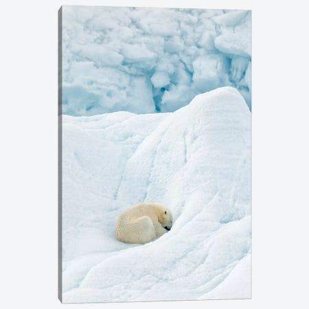 Polar Bear Sleeping Canvas Print #RAA14} by Joan Gil Raga Canvas Print