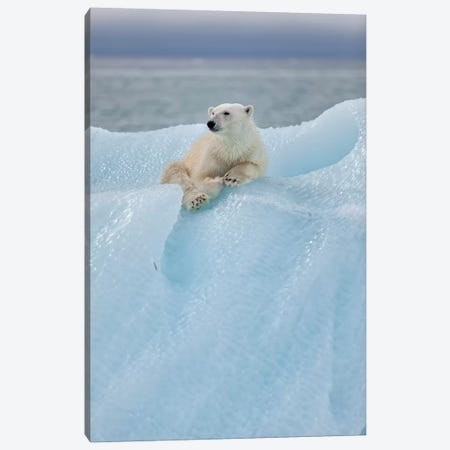 Relaxed Polar Bear Canvas Print #RAA16} by Joan Gil Raga Canvas Art Print