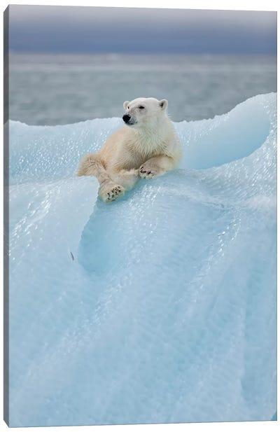 Relaxed Polar Bear Canvas Art Print