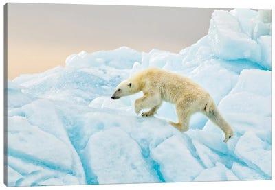Polar Bear At Svalbard Canvas Art Print