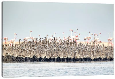 Flamingos Nursery Canvas Art Print
