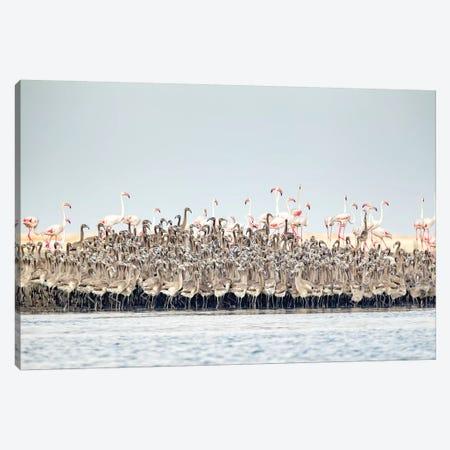 Flamingos Nursery Canvas Print #RAA5} by Joan Gil Raga Canvas Artwork