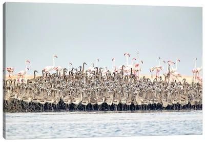 Flamingos Nursery Canvas Art Print