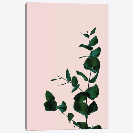Botanical II Canvas Print #RAB102} by Ruby and B Art Print