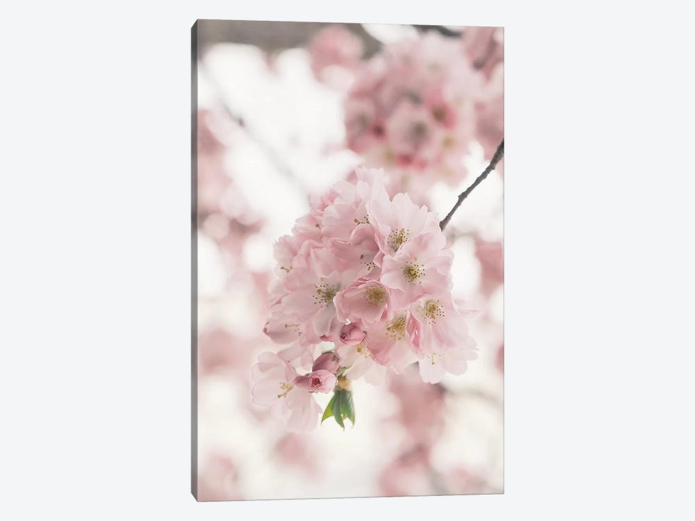 Pink Blooms by Ruby and B 1-piece Canvas Print