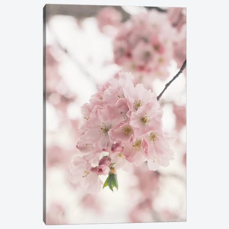 Pink Blooms Canvas Print #RAB105} by Ruby and B Canvas Wall Art