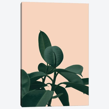 Botanical Teracotta Canvas Print #RAB10} by Ruby and B Canvas Print
